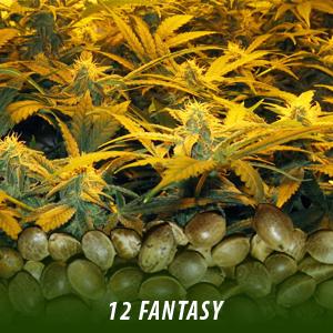 Buy Cannabis Online - Best Weed For Sale - Farmcannabisseeds